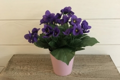Petite potée violettes
