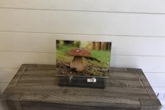 Plaque altu champignon